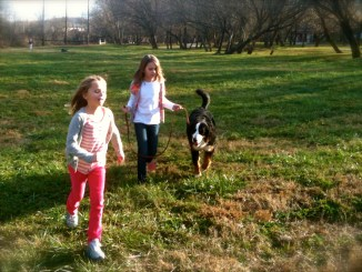 Bernese Mountain Dog Ellie learned so much during her Kabler Residency Training.