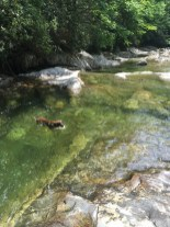 Fury water retrieving while swimming in paradise.