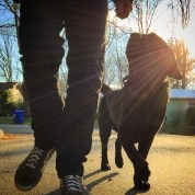 Off Leash Residency graduate Cato practicing his neighborhood untethered heel with David.