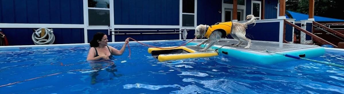 Asheville's only Dog Swim Center