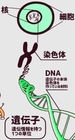 イルミナ_ゲノム解析01