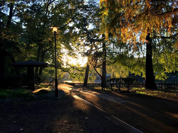 石神井公園の夕日