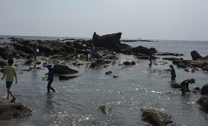 海で生き物を採る子どもたち