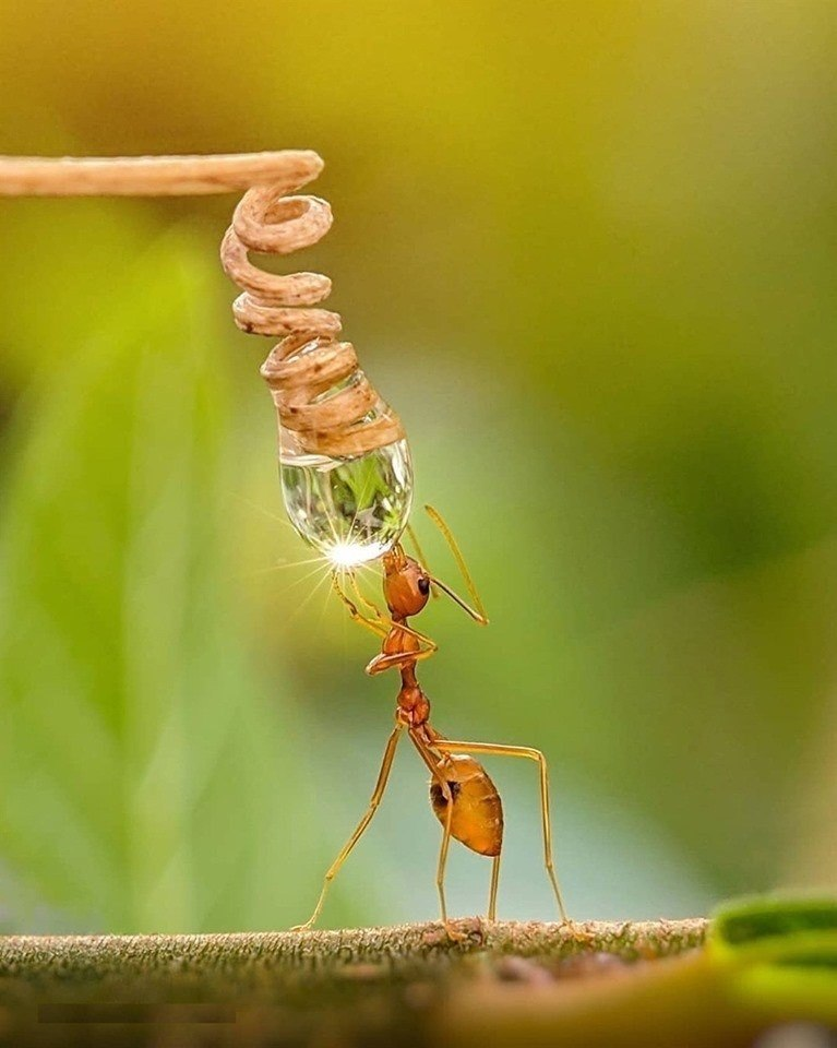 What do we owe animals and insects?