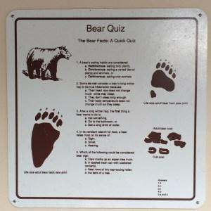 bear quiz