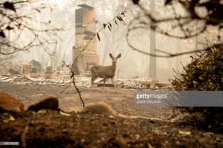 deer in Paradise