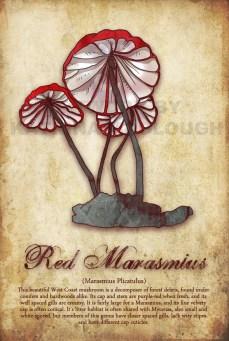 Red Marasmius