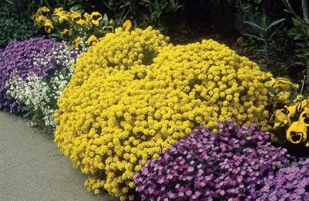 yaz çiçekleri 3