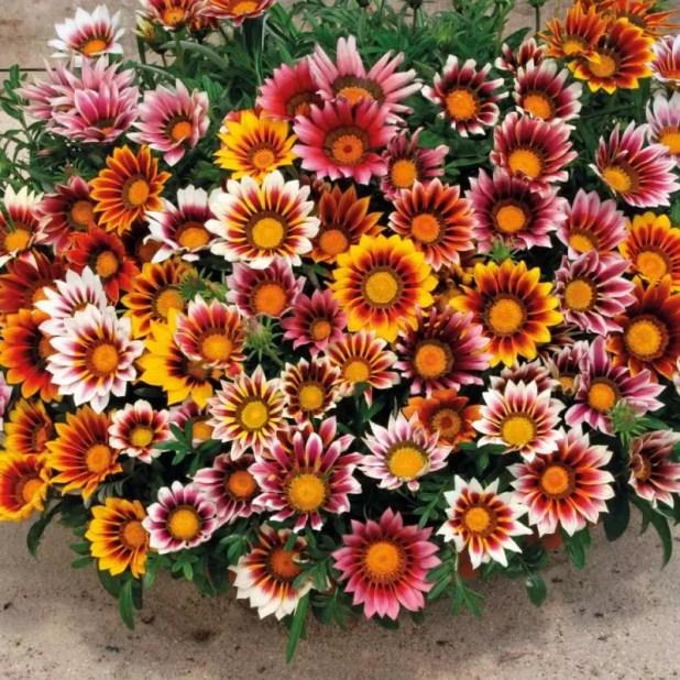 yaz çiçekleri 4