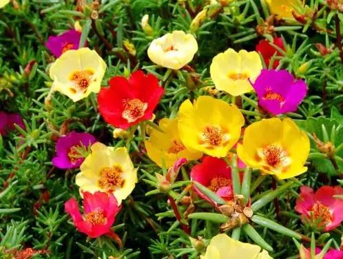 yaz çiçekleri 5