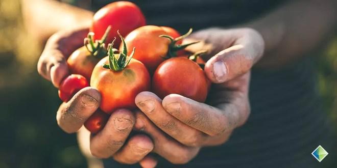 organik pazar