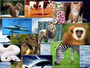 hayvanlar-alemi