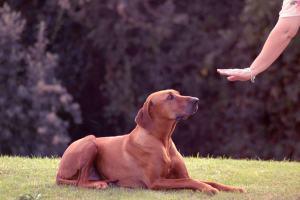 Köpek Eğitiminde Temel Komutlar Nelerdir