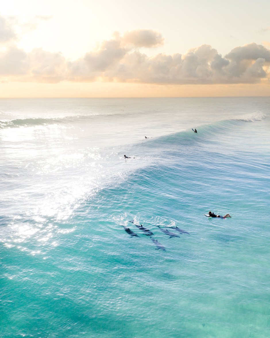 Aerial of Dolphins and a Surfer