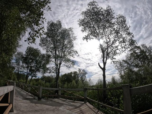 เส้นทางการขี่จักรยาน มีจุดแวะพักถ่ายรูป พร้อมวิวต้นไม้ และป่าชายเลนสวยๆ