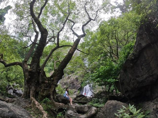 ภาพยรรยากาศทางเดินไปที่น้ำตกคลองลาน ณ อุทยานแห่งชาติคลองลาน