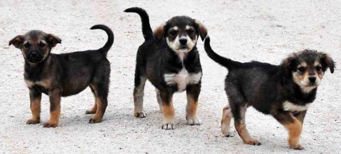 Οργανωμένη εξόντωση αδέσποτων σκύλων στην Μεγαλόπολη