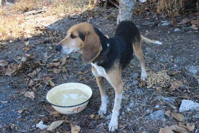 Βρέθηκε σκυλάκι σε χωριό της Μεγαλόπολης