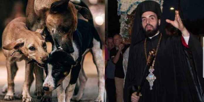 Αρχιμ. Χριστόδουλος Στέφας: Παρέμβαση για τα αδέσποτα – Αναλαμβάνω με τον πενιχρό μου μισθό τα αδέσποτα ζώα της Μεγαλόπολης