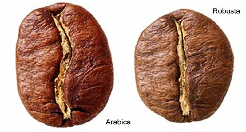 Unterschied Arabica und Robusta