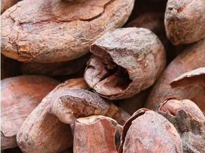 Nährstoffe im Kakao