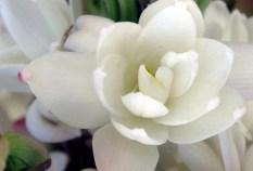 Tuberose: Source: mostbeautifulflower.com