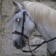 My camera made this poor Camargue horse into something a wee bit demonic looking, I'm afraid.
