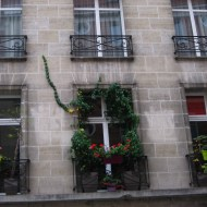 An adorable little balcony with its plants and a single creeping vine.