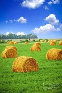 """""""Golden Hay Bales in Green Fields' by Elena Elisseeva on Fine Art America."""