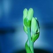 Source: flowers-picture.blogspot.com