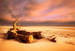 Driftwood. Photo by Paul Corica on Flickr. (Direct website link embedded within.)