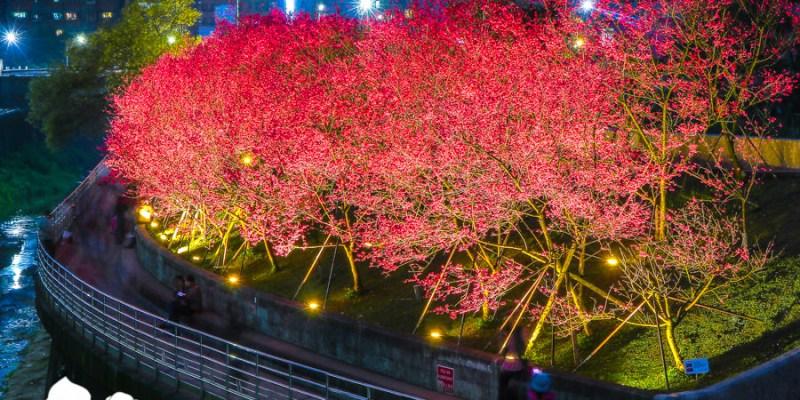 【台北景點】內湖樂活公園夜櫻季|城市裡也能賞櫻浪漫櫻花步道就在捷運東湖站