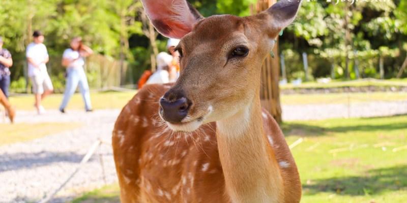【宜蘭新景點】斑比山丘 台版奈良與小鹿互動免排隊法公開!美美子下午茶咖啡