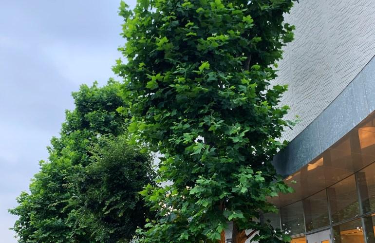 東京のすてきな名所──《都立多摩図書館》