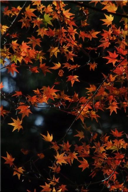 leaves2h