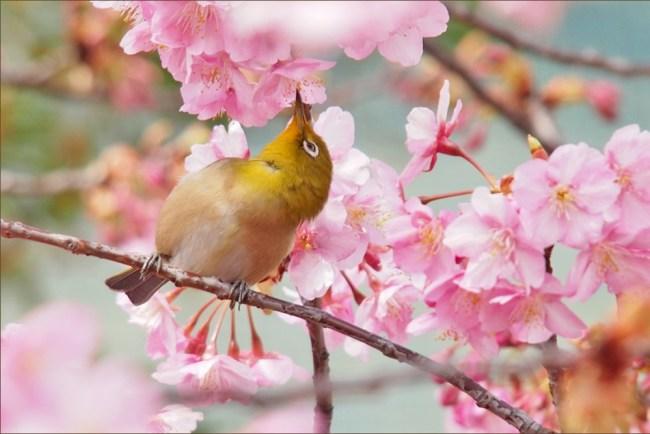 bird7a