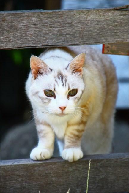 cat12c