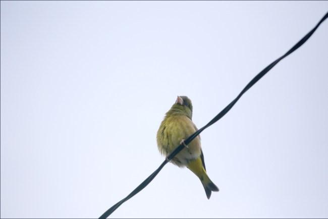 bird12b