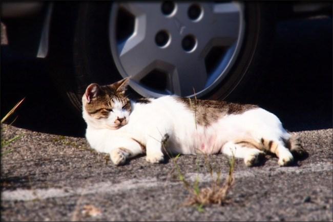 cat28f
