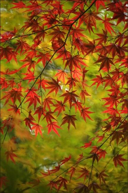 leaves10f
