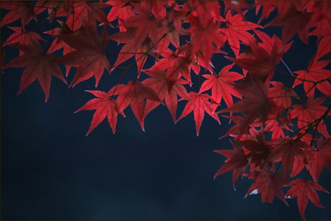 leaves10g