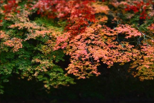 leaves11h