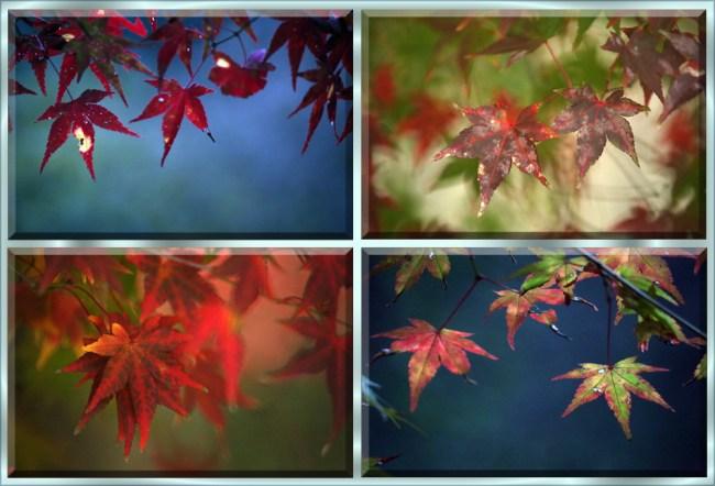 leaves12d