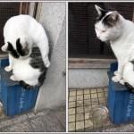 尾道野良猫(おのみちのよいねこ)