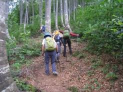 ブナ林の中の登山道を歩く