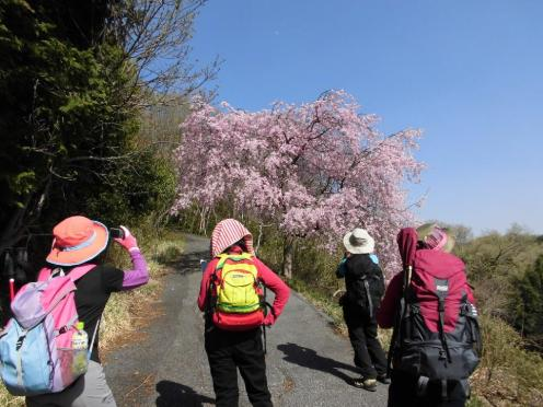 桜ロードは見所満載でした