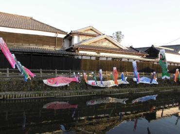 栃木市蔵の街の巴波川に泳ぐ 「うずまの鯉」