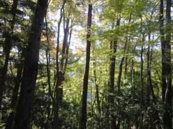 色ついた木々