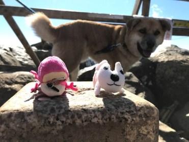 女体山山頂の三角点に立つにょろにょろと犬