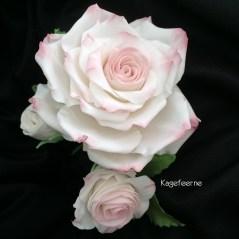 Stor flower paste rose på sort baggrund